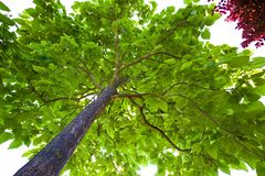 Foliage of a tree Stock Images