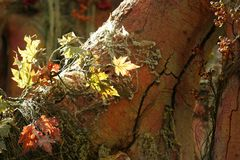 Foliage and tree trunk. Foliage, leaves on the tree changing color in autumn royalty free stock images