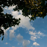 Foliage of trees and the sky Royalty Free Stock Photos