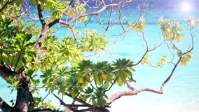 Foliage of a tropical tree. Against turquoise water of the ocean stock footage