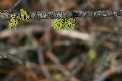 Foliage on twig Stock Images