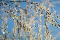 Foliage twinkles with silver and gold dew Royalty Free Stock Photography