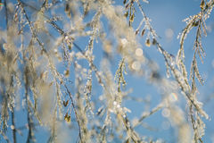 Foliage twinkles with silver and gold in the morning dew Royalty Free Stock Images
