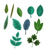 Foliage vector set Royalty Free Stock Images