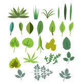Foliage vector set Stock Photography