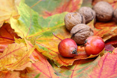 Foliage with walnuts and little apples Stock Images