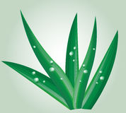 Foliage with water drops. Illustration of foliage or blades of grass sprinkled with morning dew drops Stock Images