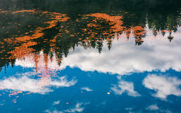 Foliage on the water reflecting forest and cloud. Beautiful nature background of foliage on the water reflecting spruce forest and cloud stock photo