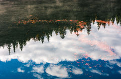 Foliage on the water reflecting forest and sky. Beautiful nature background of foliage on the water reflecting spruce forest and sky Stock Photography
