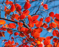 Foliages Royalty Free Stock Images