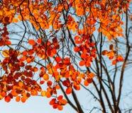 Foliages Royalty Free Stock Image