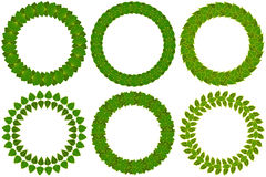 Foliate wreaths set.  Green wreath made of different tree leaves Royalty Free Stock Photos
