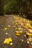 Folio on road. Yellow folio on road in an autumn forest Stock Image
