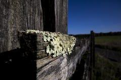 Foliose liszaj na rolnym fechtunku zdjęcie stock
