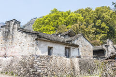Folk house and Old camphor tree Royalty Free Stock Photo