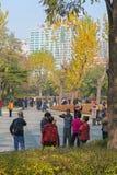 Folk i en parkera Royaltyfri Fotografi