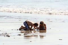 Folk i Indonesien En ung pojke och flicka som ser ett skal på stranden royaltyfri bild