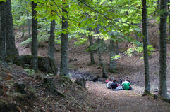 Folk i skogen Fotografering för Bildbyråer