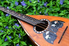 Folk mandolin. Folk ,national musical tool mandolin  on the background of green grass and flowers of periwinkles Royalty Free Stock Images