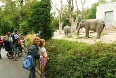 Folk observera elefanterna i zoo Zurich fotografering för bildbyråer