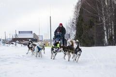 Folk och hundkapplöpning under berömmen av slutet av vinternamnet Arkivfoto