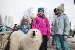 Folk och hundkapplöpning under berömmen av slutet av vinternamnet Arkivbilder