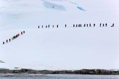 Folk på is Royaltyfri Foto
