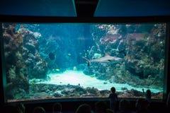Folk på akvariet Arkivfoton