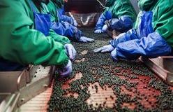 Folk på arbete Oigenkännliga arbetarhänder i skyddande blåttG Royaltyfri Fotografi