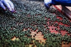 Folk på arbete Oigenkännliga arbetarhänder i skyddande blåttG Royaltyfri Foto
