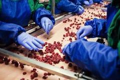 Folk på arbete Oigenkännliga arbetarhänder i skyddande blåttG Fotografering för Bildbyråer