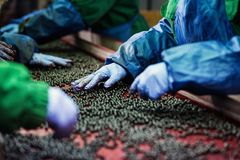 Folk på arbete Oigenkännliga arbetarhänder i skyddande blåttG Royaltyfri Bild