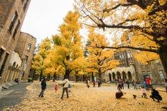 Folk på ferier med den guld- ginkgoen som tas på det Tokyo universitetet Japan Arkivfoton