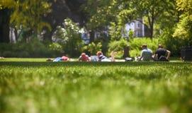 Folk på naturen Arkivfoto
