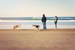 Folk på stranden som går hundkapplöpning arkivfoton