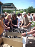 Folk som äter musslor Arkivfoto