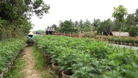 Folk som arbetar på blommafältet i den Mekong deltan lager videofilmer