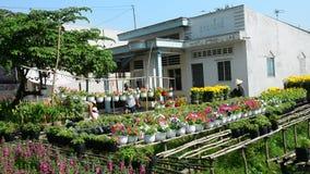 Folk som arbetar på blommafältet i sydliga Vietnam stock video