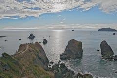 Folk som beskådar Stilla havet från stenig redwoodträdkust Arkivfoton