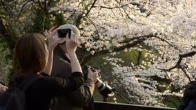 Folk som firar den körsbärsröda blomningen på Kudanishita i Tokyo arkivfilmer