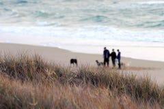 Folk som går hundkapplöpning i morgonen Fotografering för Bildbyråer