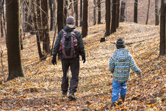Folk som går i skog Royaltyfri Foto