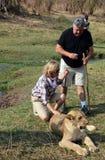 Folk som går med lejon Arkivbild