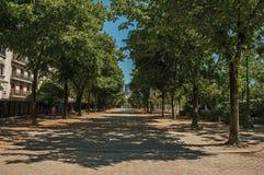 Folk som går på trottoaren med träd på en solig dag i Paris royaltyfri fotografi