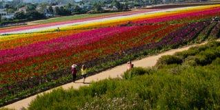 Folk som går vid blommafältet Royaltyfri Foto