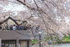 Folk som håller ögonen på Cherry Blossom och kopplar av i Chidorigafuchi PA Fotografering för Bildbyråer