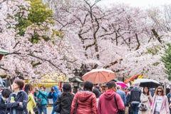 Folk som håller ögonen på Cherry Blossom och kopplar av i Sakura Festival a Arkivbild