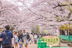 Folk som håller ögonen på Cherry Blossom och kopplar av i Sakura Festival a Royaltyfri Foto