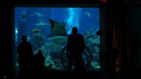 Folk som håller ögonen på det stora akvariet i Dubai stock video
