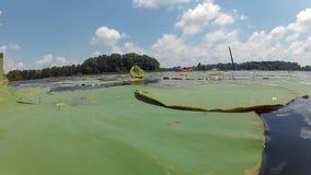 Folk som kayaking på sjön med liljablock arkivfilmer